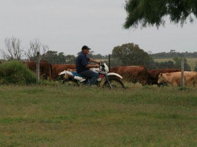Chinchilla-Queensland-11